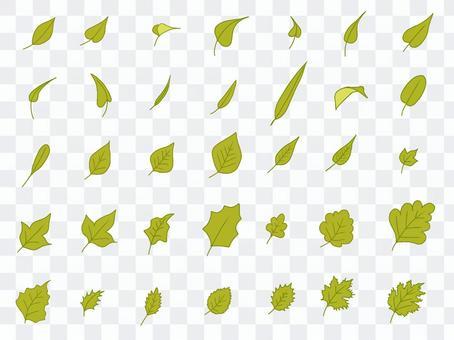 葉っぱのセット③