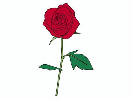 簡單的玫瑰