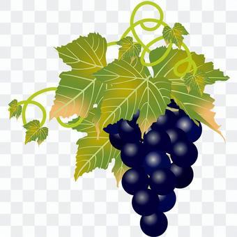 美味的葡萄7
