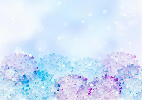繡球花_藍色背景