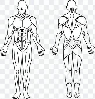 人體肌肉圖
