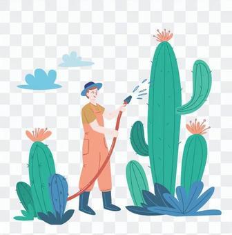 一個人在給仙人掌澆水