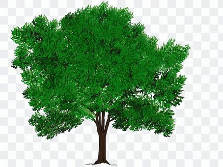Street tree (dark green)
