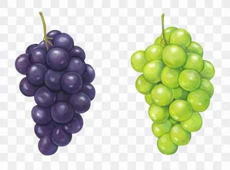 Grape Kyoho & Muscat