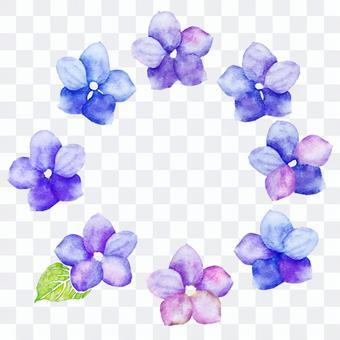 繡球花的框架水彩繪畫