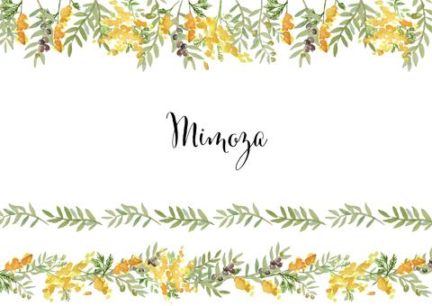 橄欖 & 含羞草水彩畫框
