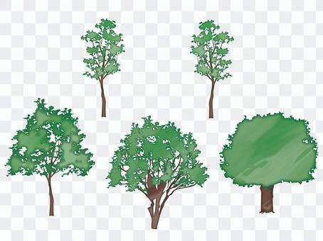 木 水彩風 セット