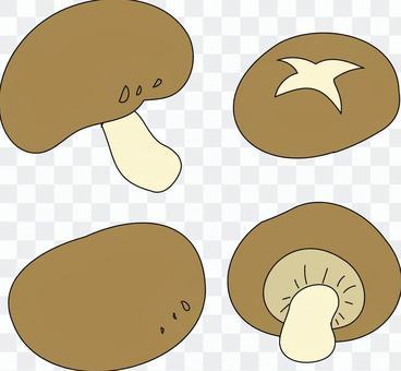 표고 버섯 세트