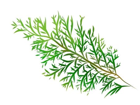 노송 나무의 잎