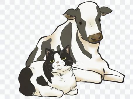 牛紋貓和牛
