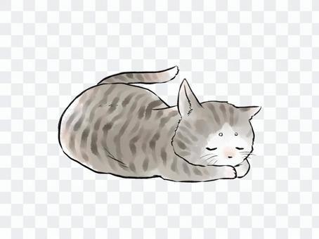 寝たふりをする猫