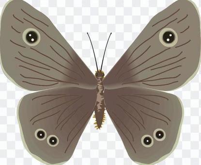 ヒメウラナミジャノメ タテハチョウ科