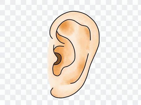 耳のイラスト