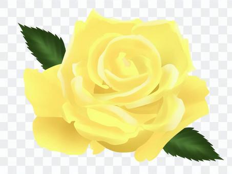 黄色いバラ・2