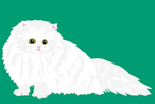 Persian cat's cat