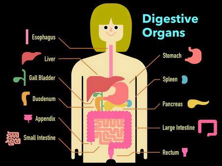 黒背景の英語の名称入り消化器官の図