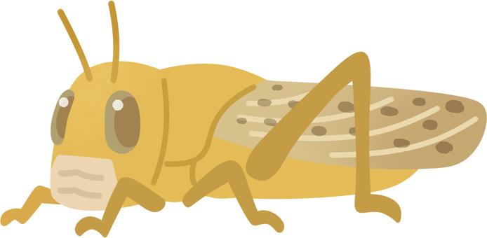 Desert locust (adult / community fauna)