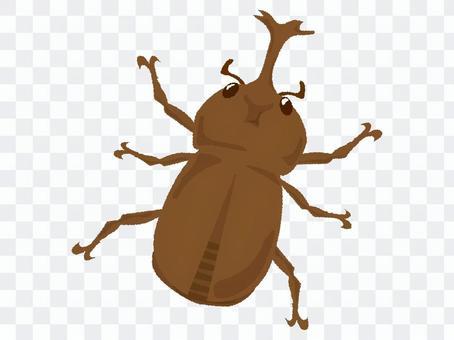 딱정벌레 1