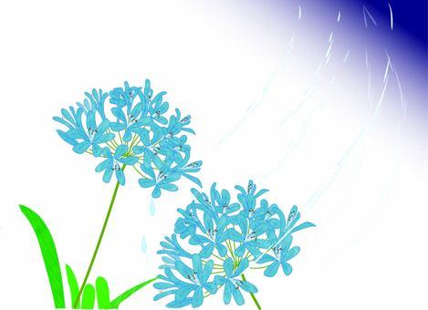 愛情花上的雨雨刷