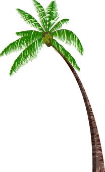 Palm tree palm tree tropical summer image