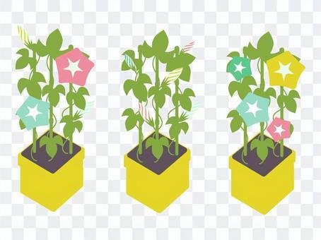 牽牛花盆栽植物/粉彩從芽到開花