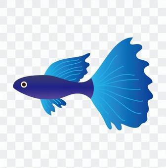熱帶魚(藍色)