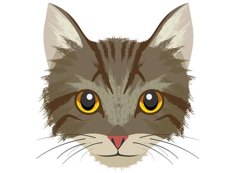Cat D Kijitora