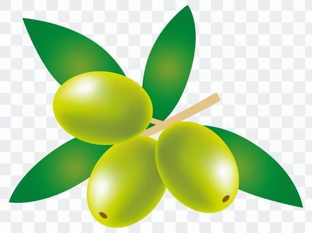 橄欖果實3 c_cs