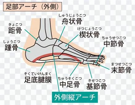Foot arch (outside)