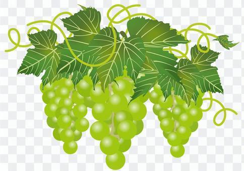 美味的葡萄8