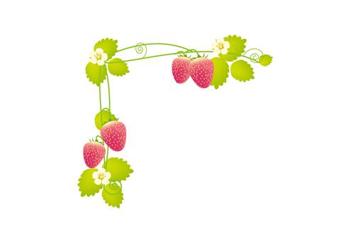草莓框架上