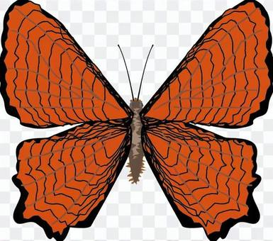 Kabatateha Tatehacho家庭昆蟲