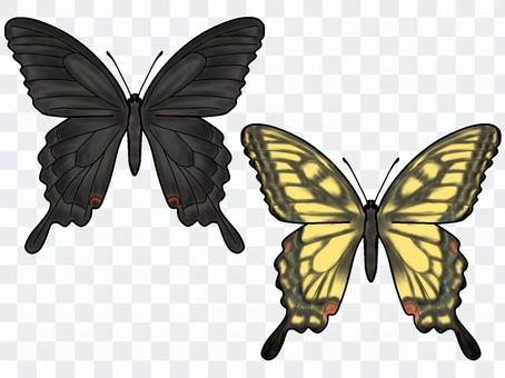 亮片,燕尾蝴蝶