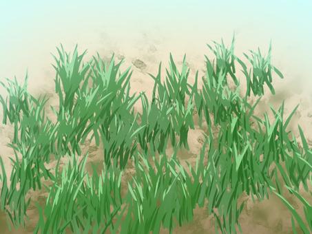 地面土壤田間草