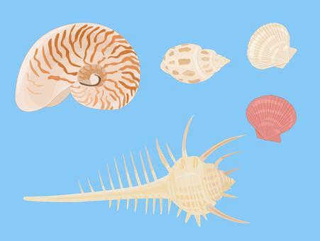 貝殻セット