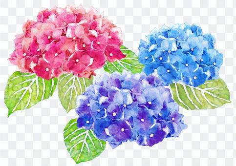 繡球花水彩圖片壁紙