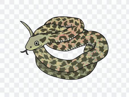 虎斑頸槽蛇