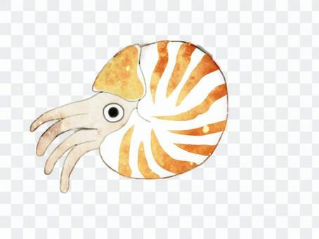 Ohm shell