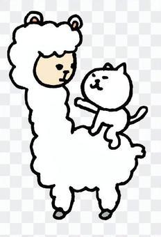 以一隻貓羊駝