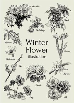 冬季花卉插圖