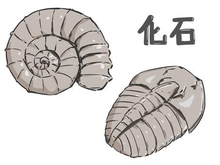 Ammonite / trilobite fossil set