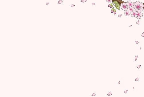 櫻花2-2