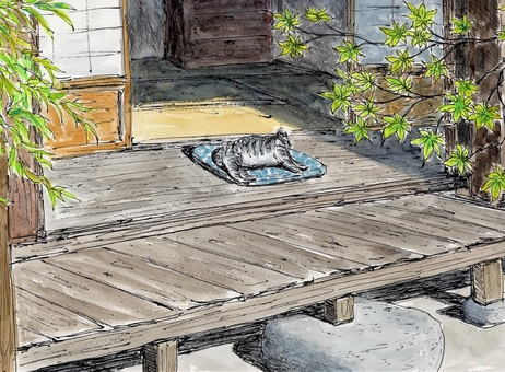 Cat taking a nap on the porch