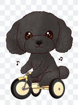 Norinori♪貴賓犬黑色