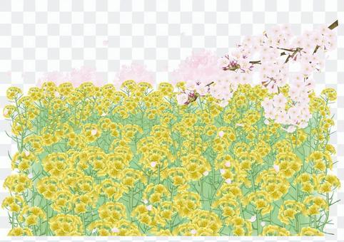 油菜田和櫻花(PNG是透明的,沒有天空)