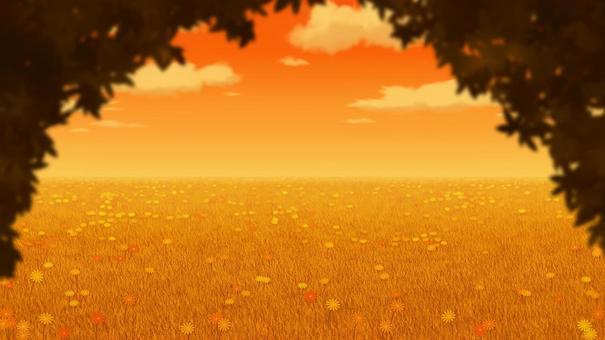 傍晚時分,草地和鮮花的背景16:9