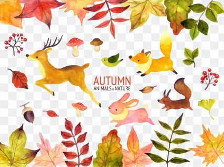秋季動物插圖集