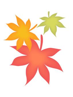 槭樹三種顏色