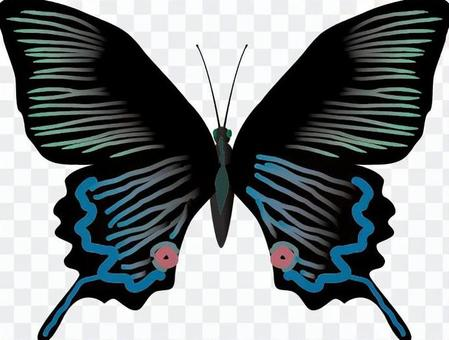 ミヤマカラスアゲハ 昆虫 虫 捕まえる