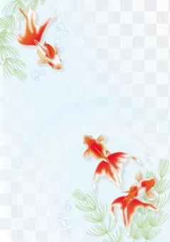 金魚和水草垂直